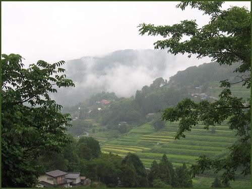 11 tanada in summer rain