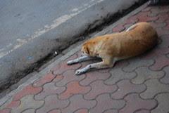 Yeh Bat Sach Hai Main Sadkon Ka Gandu Hoon by firoze shakir photographerno1