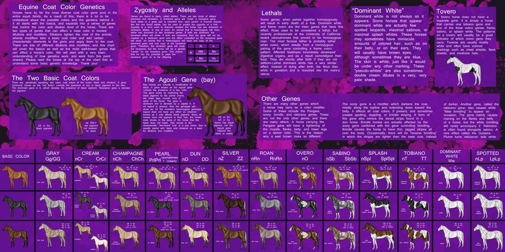 Horse Color Genetics - Explained by Zephyrra on DeviantArt
