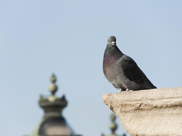 Pássaros que vivem em áreas urbanas podem improvisar objetos criados por humanos em seus ninhos (Foto: Jérôme Gorin / AltoPress / PhotoAlto / AFP)