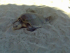 tortue (2)