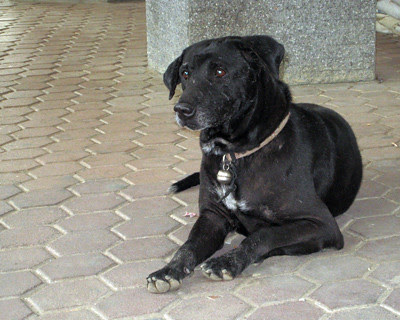 blackdog1