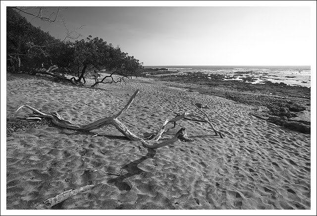 Langosta Beach 6