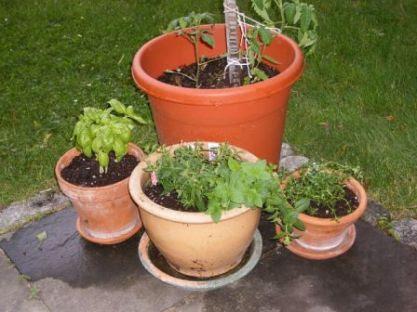 My little herb garden