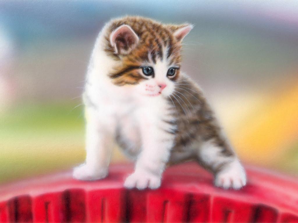 動物 かわいい猫の画像集 壁紙 動物 かわいい猫の画像集