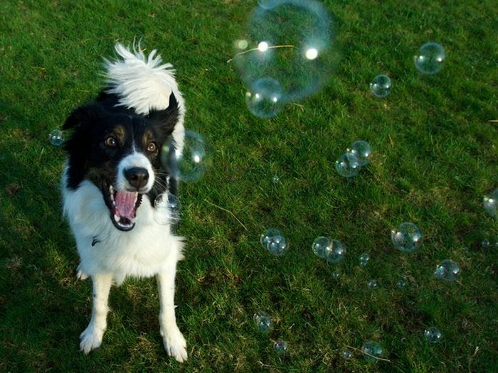 happiest_dogs_on_the_internet_39 (700x525, 221Kb)