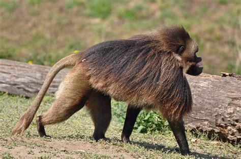 51 dos animais exóticos mais bonitos da Terra   MDig