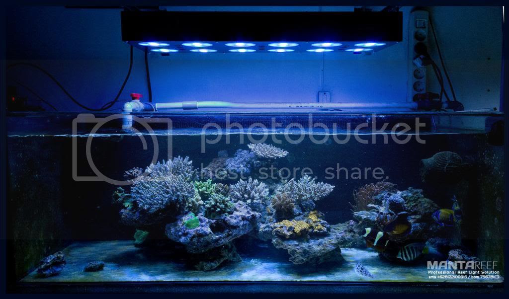 Diy Led Knp Mudah Rusak Indonesia S Saltwater Aquarium ...
