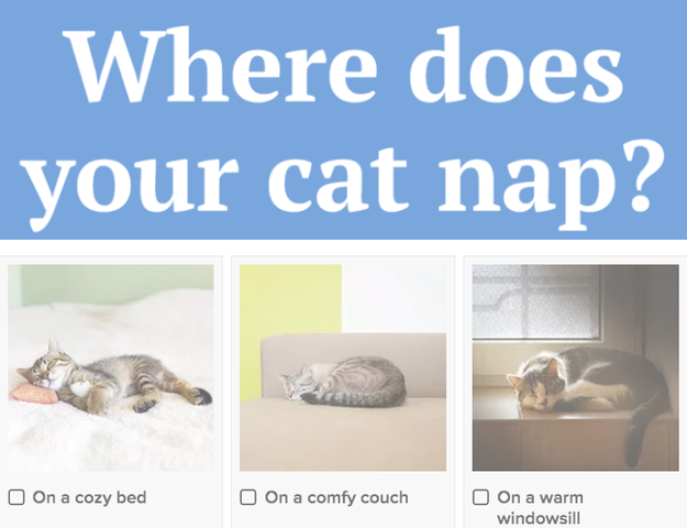 Tell Us About Your Cat And We'll Tell You Which Life It's On