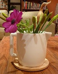 A teapot of flowers and Deidre