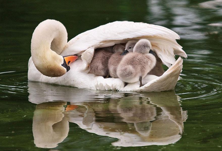 http://www.boredpanda.com/cute-animal-parenting/?image_id=animal-parents-2.jpg
