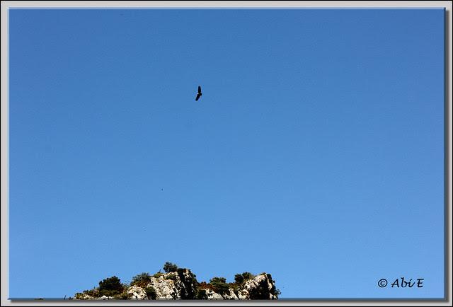 2 Buitre volando