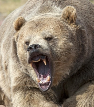 A group of Alaska deer hunters is lucky to be alive after a dangerous encounter with five bears.