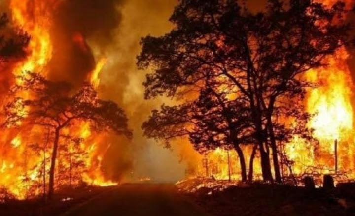 Risultati immagini per Boschi da bruciare.