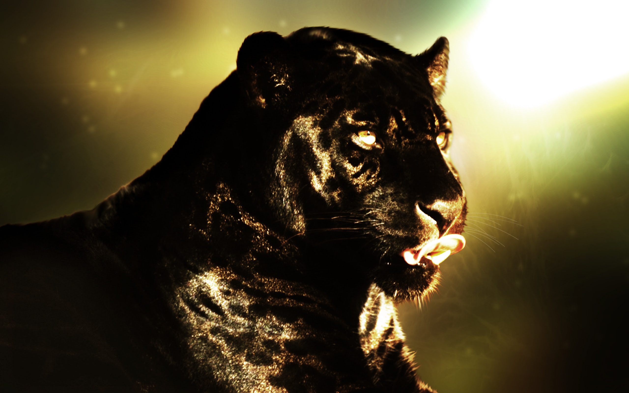 Panther HD Wallpapers