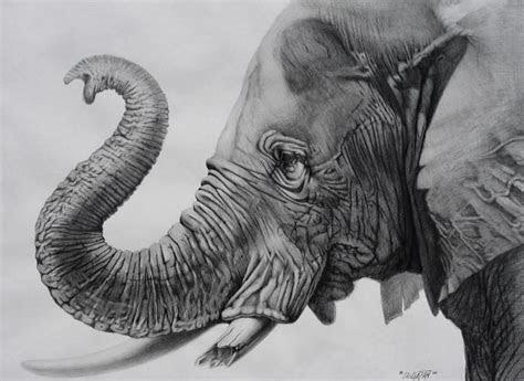 elephant drawings   printable jpeg png format