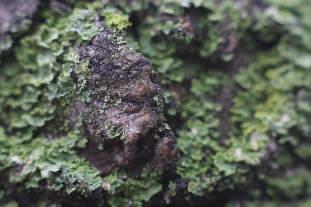 lichen, jamison square