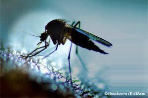 GE Mosquito
