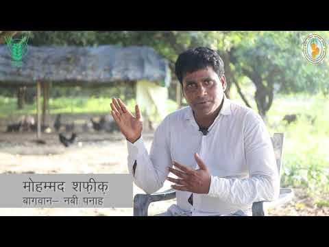 Aam Ke Aam, Murge ke daam: A film based on mango poultry
