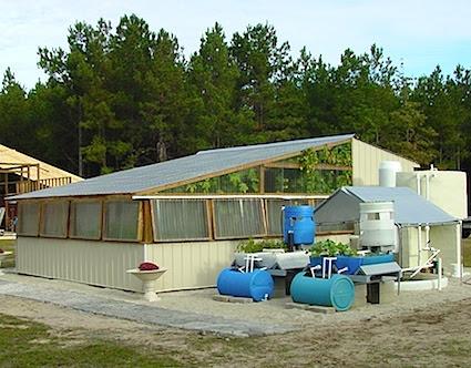 Greenhouse Aquaponics System