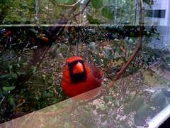 stoopid bird
