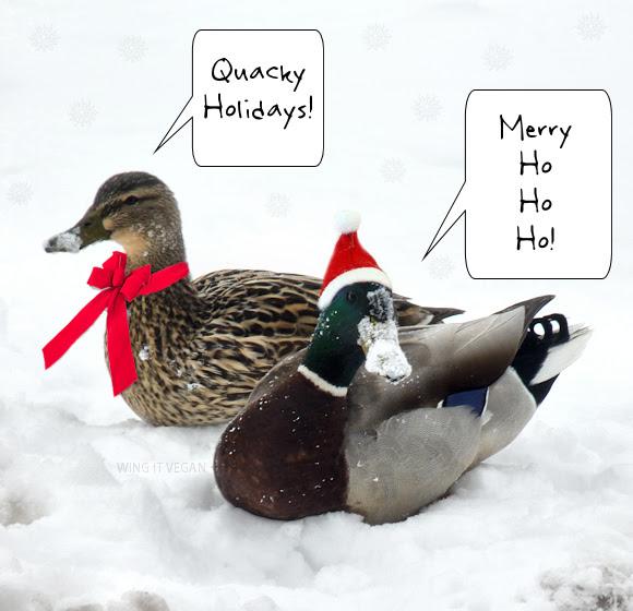 Quacky Holidays!