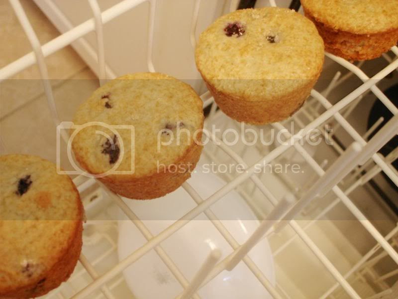 Blueberry Dishwasher Muffins