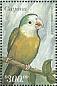 Grey-cheeked Parakeet Brotogeris pyrrhoptera