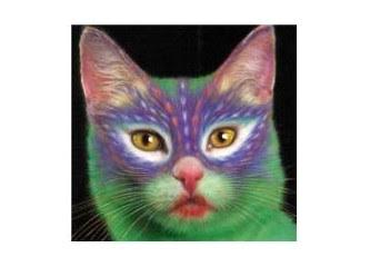 Kedi Boyama Sanatı Resim Milliyet Blog