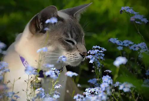 Image result for cat smelling flowers sneezing