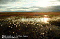 Teshekpuk Lake region in Alaska