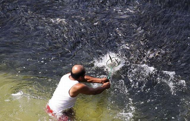 Incríveis cardumes de peixes na costa de Acapulco 06