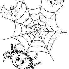 Dibujos Para Colorear Arañas Y Telarañas Para Halloween Es