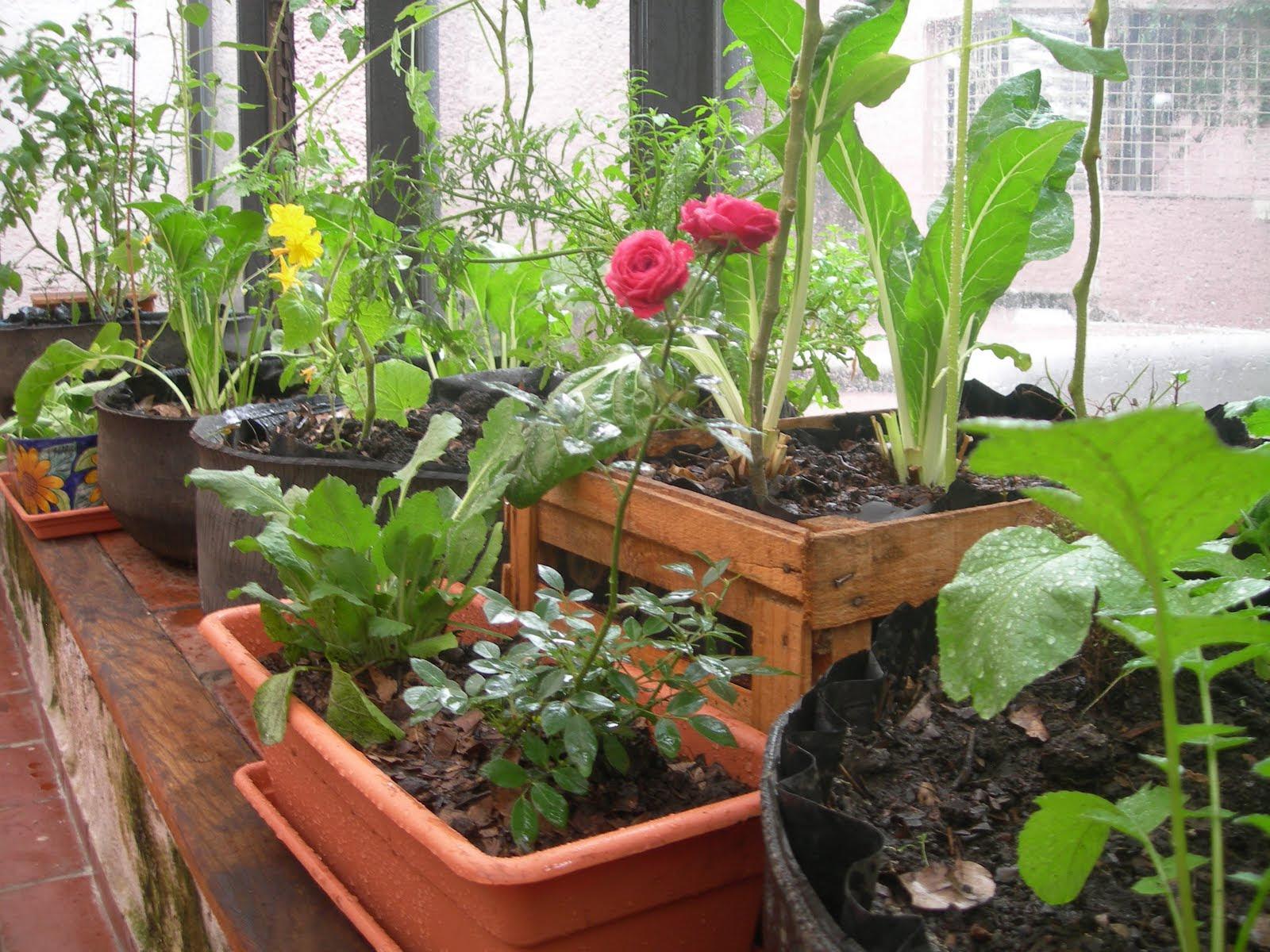 Resultado de imagen para hortalizas en el huerto
