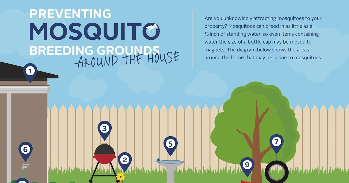 Eliminate Mosquitoes In Backyard - BACKYARD HOME