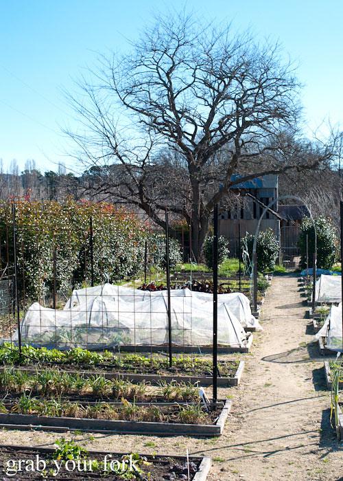 Restaurant garden plot at Grazing in Gundaroo