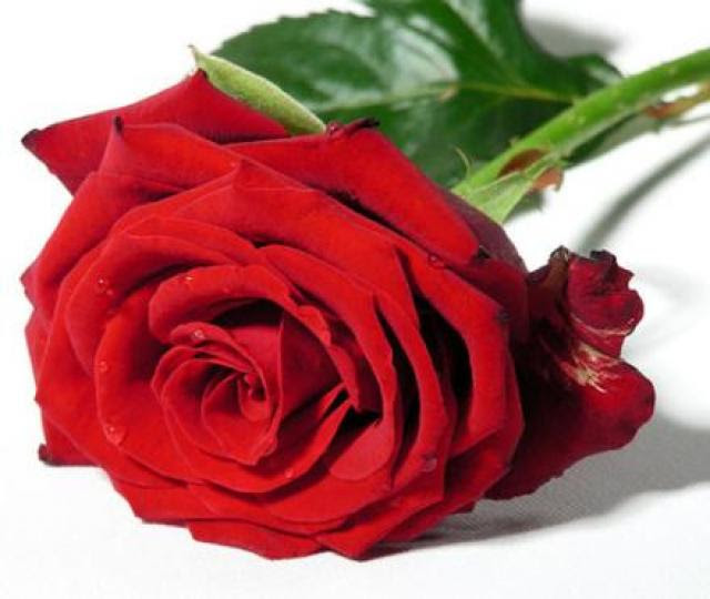 Las Rosas Rojas No Existen Radio Reloj