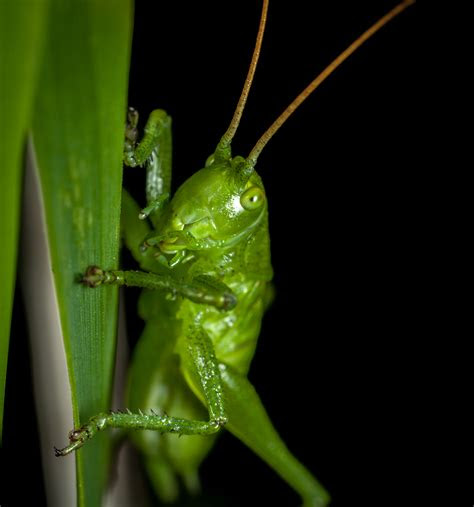 green insect  green leaf  stock photo