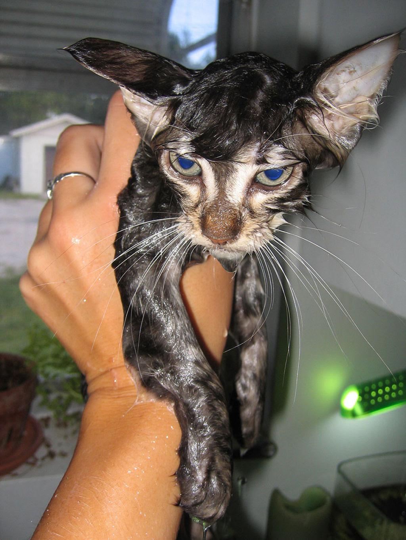 Fotografias engraçadas de gatos tomando banho 09