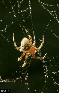 The drug could erase frightening memories - such as spider phobia
