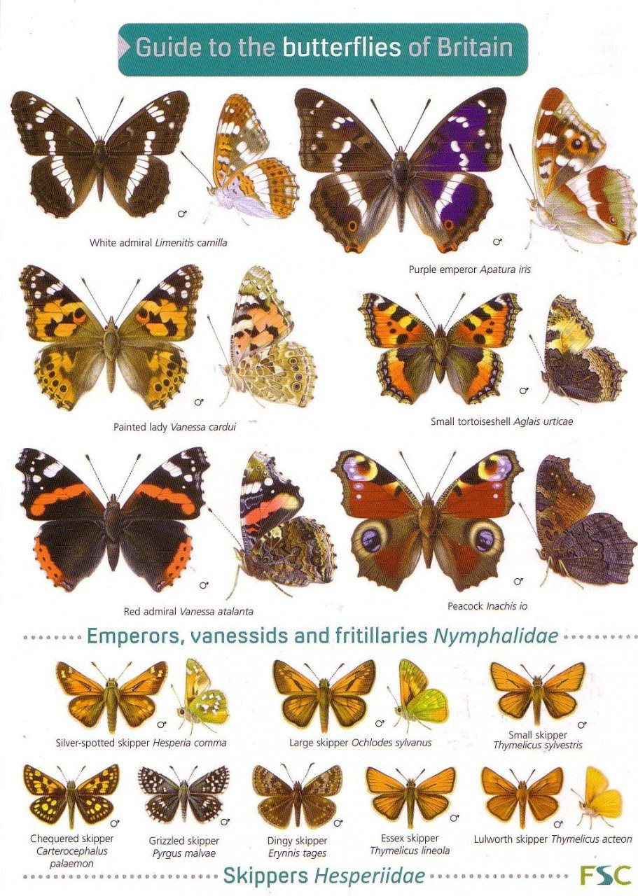 Guide To The Butterflies Of Britain Richard Lewington