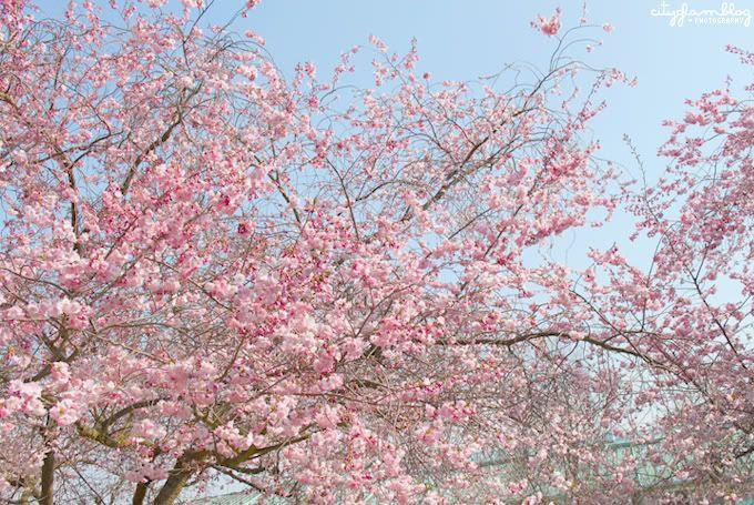 http://i402.photobucket.com/albums/pp103/Sushiina/cityglam/blossom4.jpg