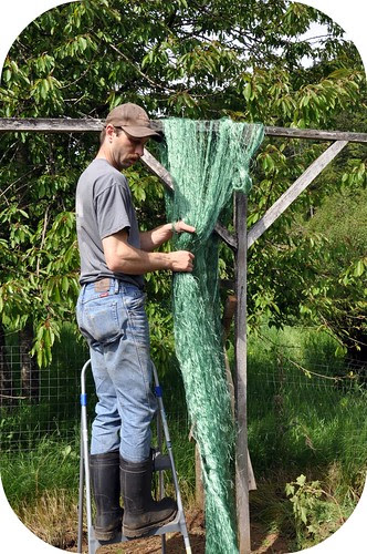 Bean netting