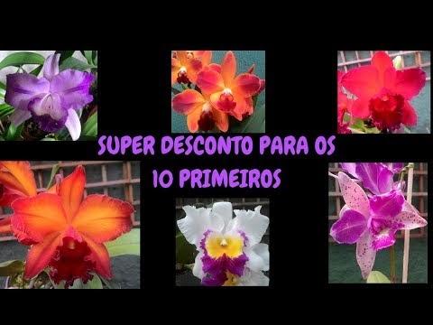ORQUÍDEAS COM SUPER DESCONTO PARA OS 10 PRIMEIROS!