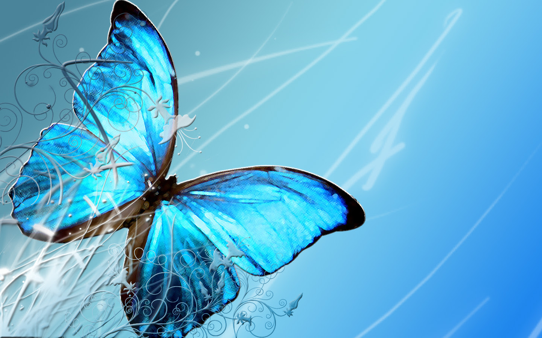 Butterfly Wallpaper, Blue Butterfly Wallpaper, #7504