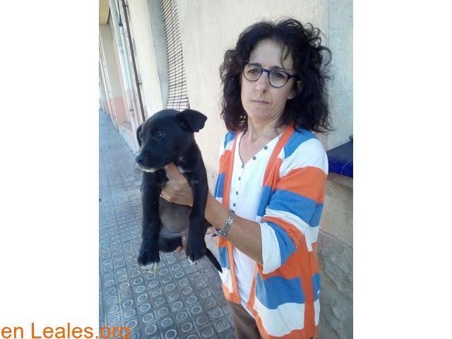 Perros ya adoptados » España » Barcelona » NEGRI ADOPTADA
