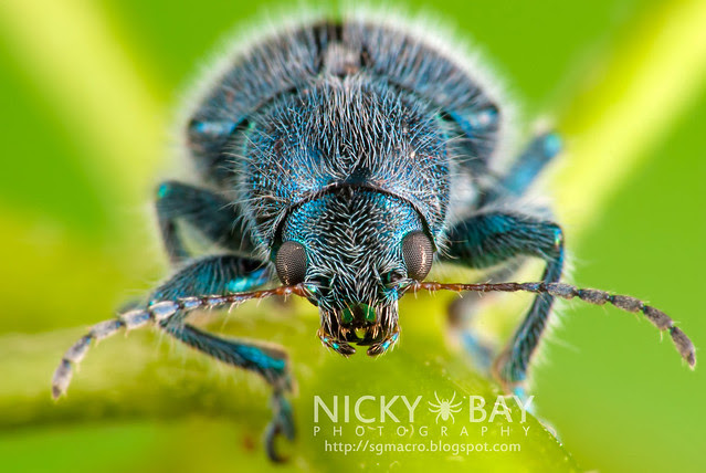 Beetle - DSC_4568