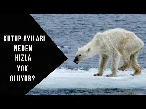 Küresel ısınma Hızla Devam Ediyor ve Kritik Sınır Çoktan Aşıldı (VİDEO)