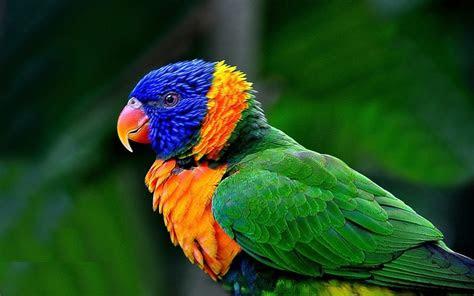 macaw windows  theme themepackme