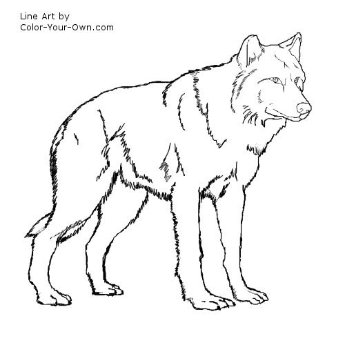 Wolf Standing Coloring Page